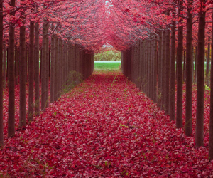 nature, red, and pink image