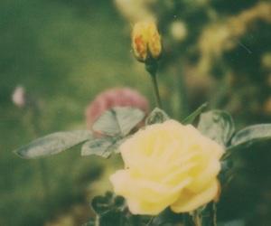 film, flower, and garden image