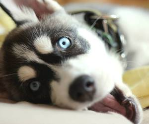 dog, puppy, and eyes image