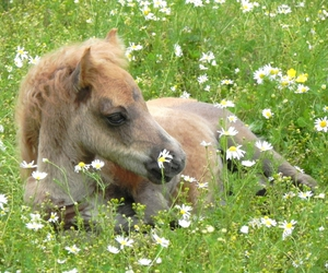 horse, sommer, and foal image
