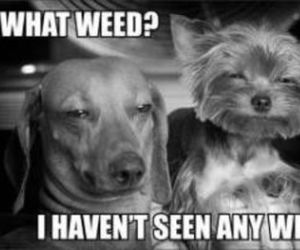 dog and weed image