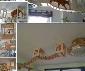 cat, do it yourself, and wood image