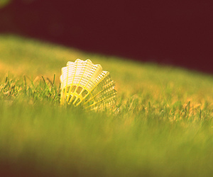 badminton, nature, and photography image