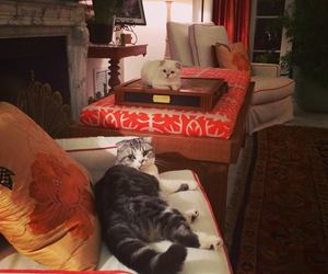 cat, Taylor Swift, and meredith image