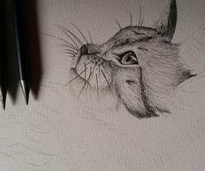 cat, draw, and meow image