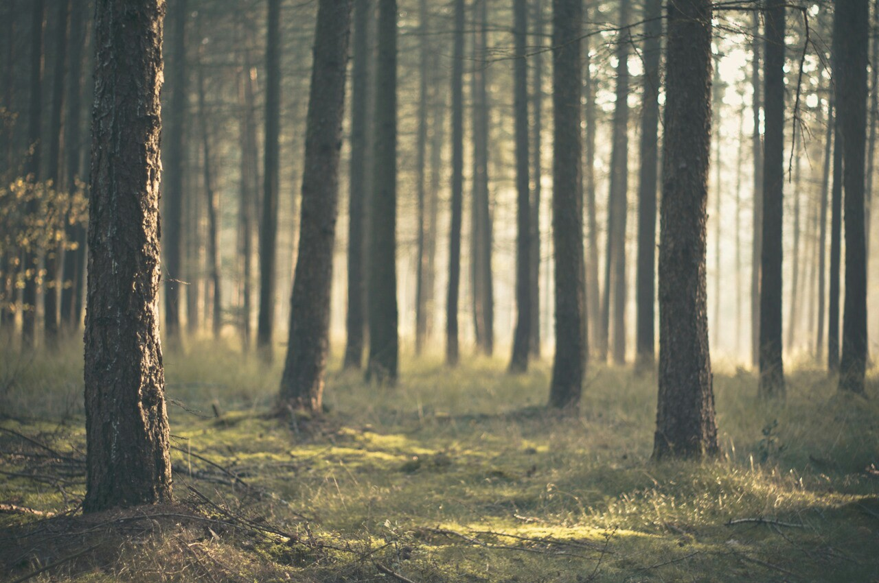 escape and forest image