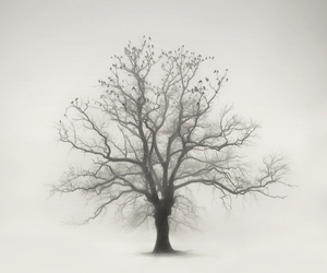tree, black and white, and birds image