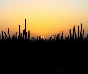 beautiful, cactus, and photography image