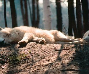 nature and Polar Bear image