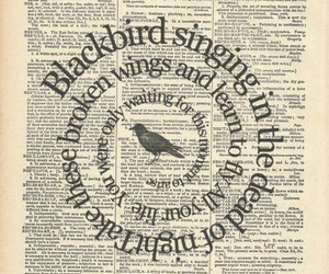 blackbird, beatles, and song image