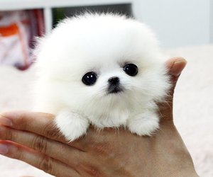 cute and OMG image