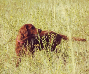 dogs, hunter, and photography image
