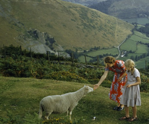 nature, sheep, and girl image