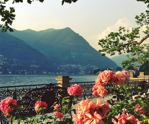 mountains, flowers, and rose image