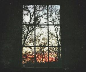 window, grunge, and tree image