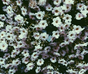 floral, flowers, and vscocam image