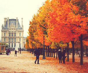 tree, autumn, and city image