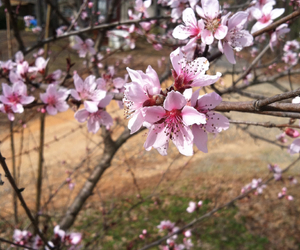 arkansas, spring, and blossoms image