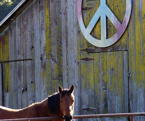 barn, colors, and hippie image