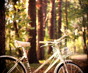 bike and forest image