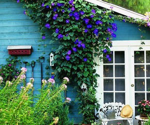 flowers, blue, and house image