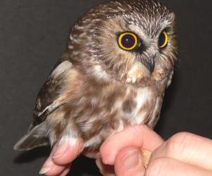 bird, cute, and owl image