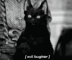 cat, evil, and salem image