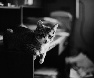 cat, photography, and vintage image