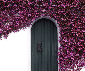 door, flowers, and purple image