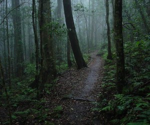 dark, forest, and trees image