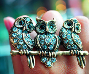 owl, ring, and blue image
