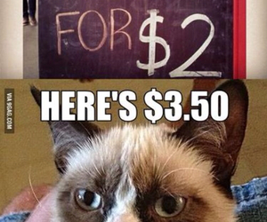 funny, cat, and coffee image