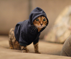 cat, funny, and photography image