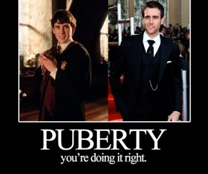 funny, harry potter, and puberty image