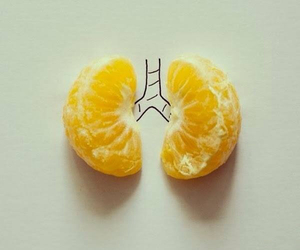 orange, lungs, and art image
