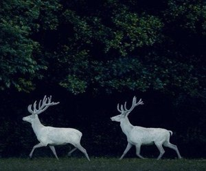 deer, forest, and tree image