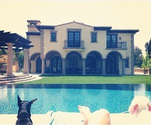 house, dog, and pool image