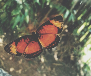 butterfly, orange, and summer image