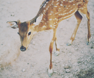 deer, animal, and photography image