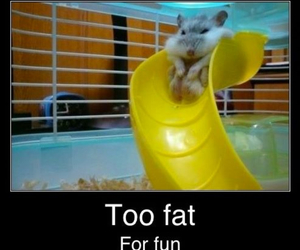 fat, funny, and hamster image