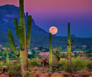 cactus, moon, and nature image