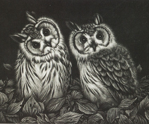 owl, art, and black and white image