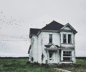 house, bird, and home image