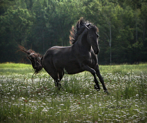 black and horse image