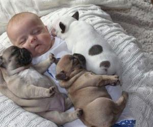 baby, dog, and puppy image