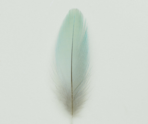 feather, blue, and wallpaper image