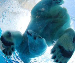photography, Polar Bear, and water image