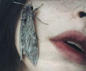 art, dark, and moth image