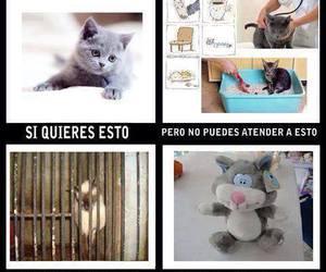 gatitos image