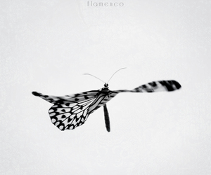 black and white, butterfly, and dance image